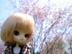 さくら(2)