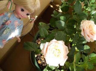 お花といっしょ(4)