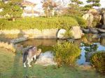 朝の和風公園