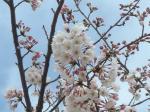桜さ~~んこっち向いて