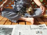 杏 新聞を読む