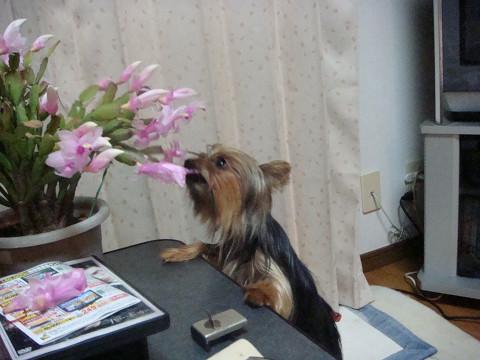 お花だいちゅきでちゅ