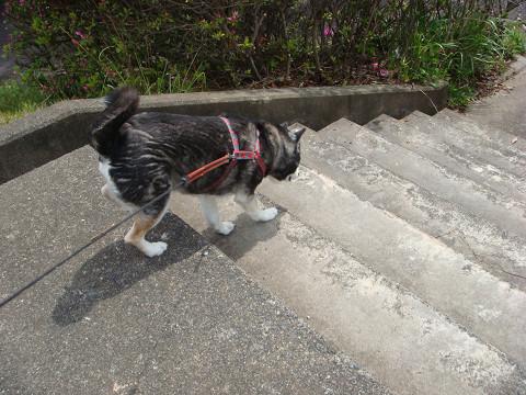 階段もトントントン