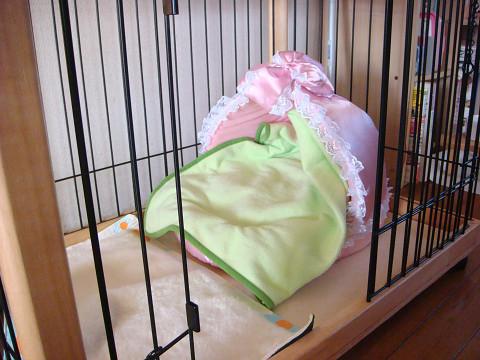 杏のお部屋