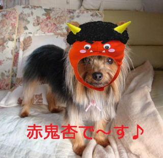 杏赤鬼さん