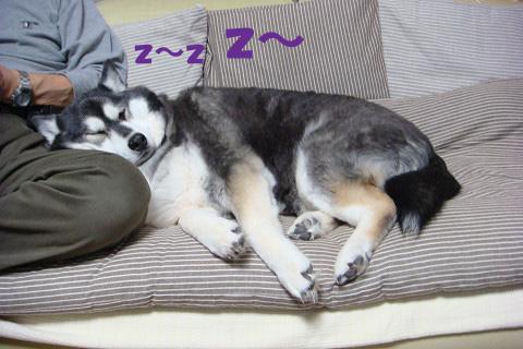 とーさんの枕はサイコー