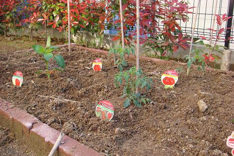 トマト各種