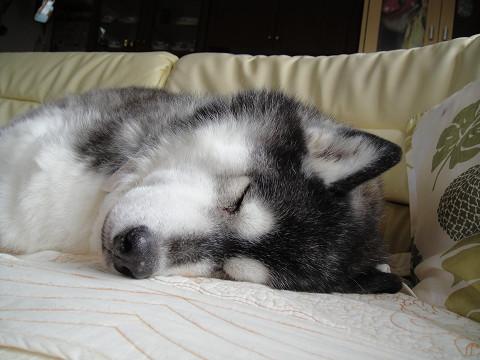 熟睡ちゅうです 0908010007