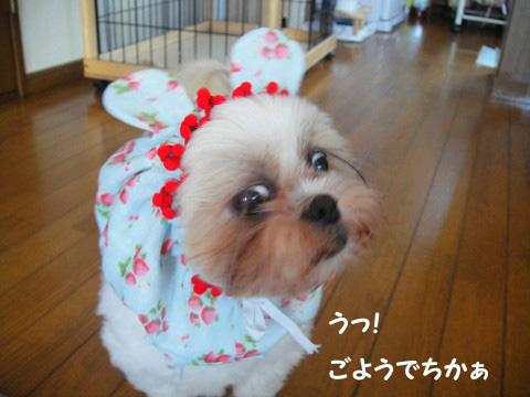 くまみみ美夕さん 0908260002のコピー