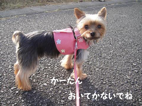今日の散歩 杏編 0909050013のコピー