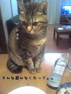 Image104[1]