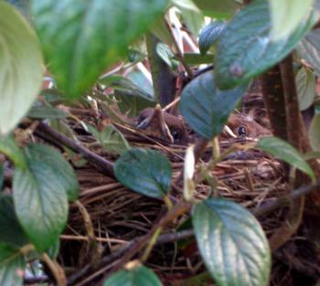 birds-004.jpg