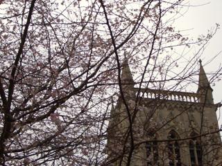blossoms2007.jpg