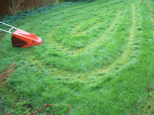 lawn01.jpg