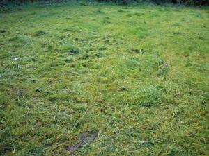 lawn02.jpg