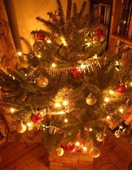 tree2007-5.jpg