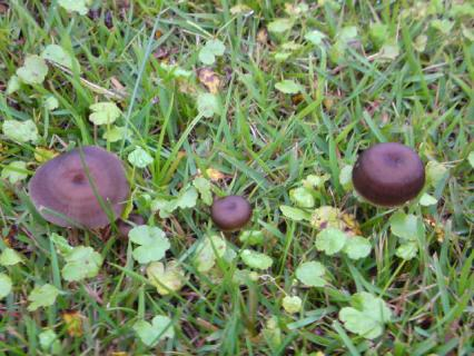 mushroom_family