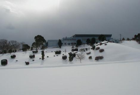 snowymorning5.jpg
