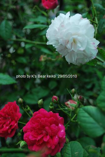 005_20100529075826.jpg