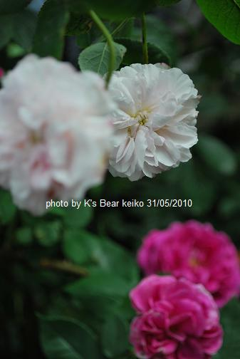 012_20100531163214.jpg
