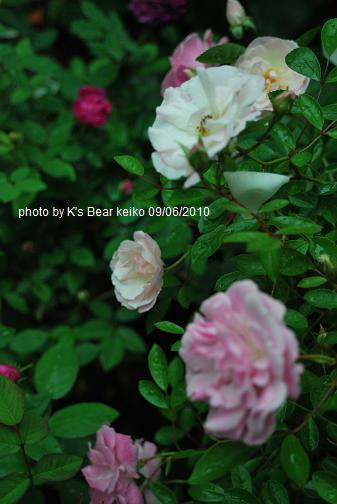 021_20100609174918.jpg