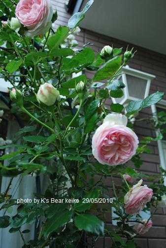 039_20100529075640.jpg