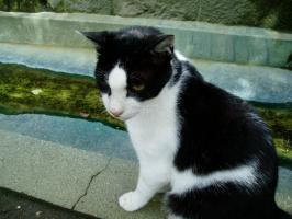 延命地蔵尊の猫