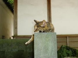 延命地蔵尊の猫2