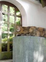 延命地蔵尊の猫3