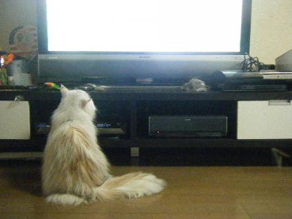 テレビは楽しいデスね
