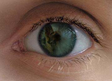 目の中のガル