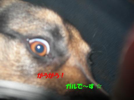 2010年02月07日_DSCN5887