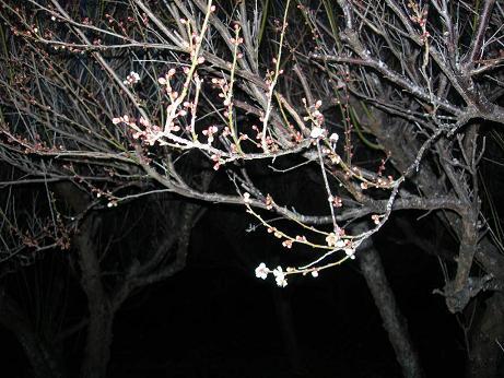 2010年02月10日_DSCN5898