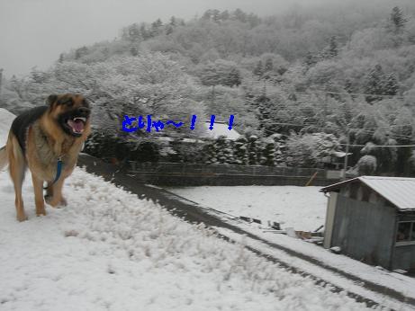 2010年02月18日_DSCN5913