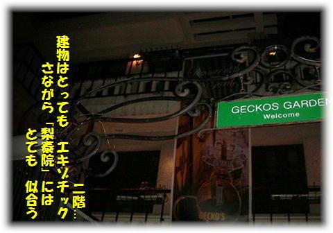 Geckos Garden1