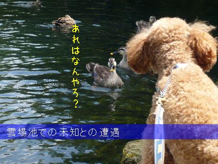 032_kumobaike_2.jpg