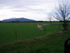trip+in+NZ+003_convert_20080929165316[1]
