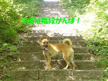 asamushi2