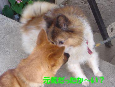 fusafusanoko3