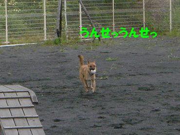 tatata4
