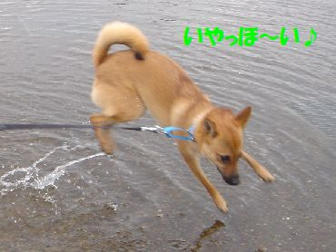 wakuwakuhiroba4