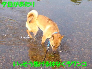 yuuhi