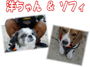 P9201743.mix 洋ちゃん&ソフィ