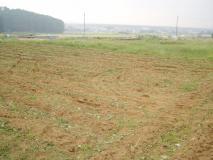 最後の畑4