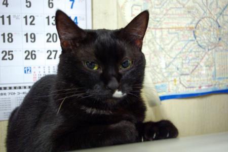 黒猫って・・・