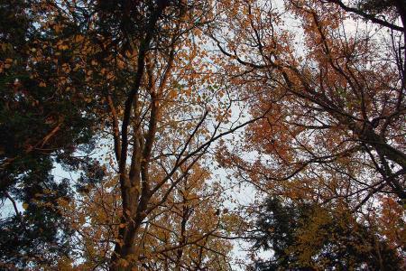 秋色の木々