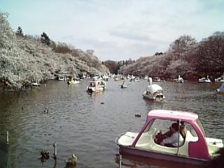 2009_hanami_1.jpg