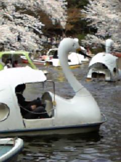 2009_hanami_4.jpg