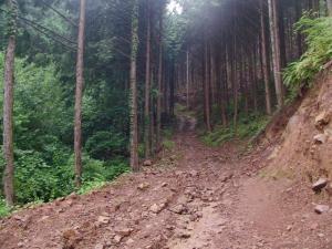 雨の阿蔵林道2