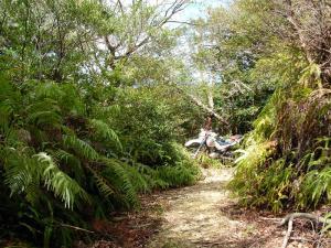 のんびり林道 2